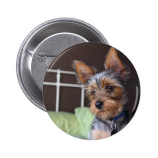 Yorkshire Terrier dog cute photo button, pin
