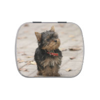 Yorkshire Terrier dog cute photo candy tin