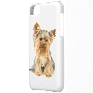Yorkshire Terrier dog cute photo iphone 5c case