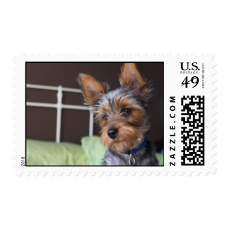 Yorkshire Terrier dog cute photo postage