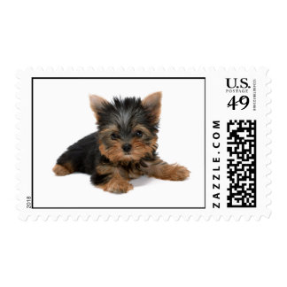 Yorkshire Terrier dog cute puppy photo postage