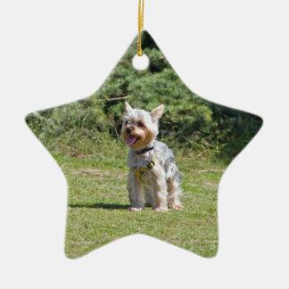 Yorkshire Terrier dog hanging star ornament, gift Ceramic Ornament