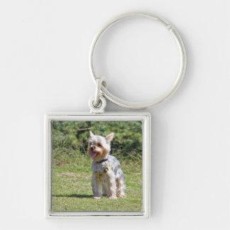 Yorkshire Terrier dog keychain, gift idea Keychain