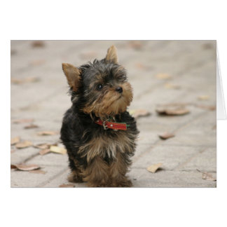Yorkshire Terrier dog photo blank custom note card