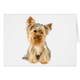 Yorkshire Terrier dog photo blank custom note card