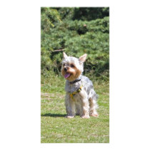 Yorkshire Terrier dog photo card, gift idea Card