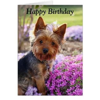 Yorkshire Terrier dog photo custom birthday card
