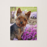 """Yorkshire Terrier dog pretty photo jigsaw puzzle<br><div class=""""desc"""">Beautiful photo of a yorkshire terrier dog jigsaw puzzle.  great gift idea for dog lovers</div>"""