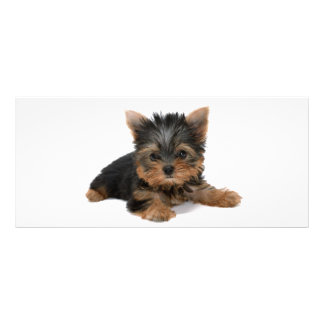 Yorkshire Terrier dog pupppy cute custom rack card