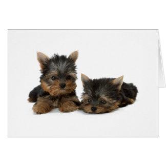 Yorkshire Terrier dog puppy blank custom note card