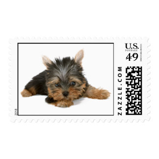 Yorkshire Terrier dog puppy cute photo postage