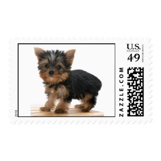 Yorkshire Terrier dog, puppy cute photo postage