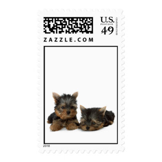 Yorkshire Terrier dog, puppy cute postage