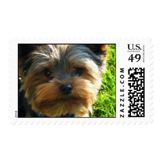 Yorkshire Terrier Dog Stamp
