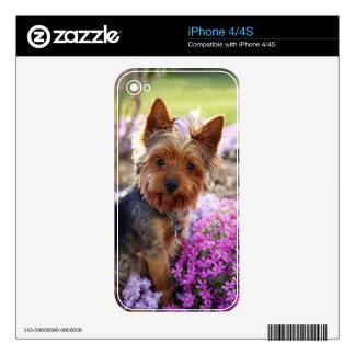 Yorkshire Terrier dog yorkie cute beautiful photo Decal For iPhone 4