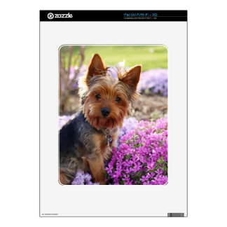 Yorkshire Terrier dog yorkie cute beautiful photo Skin For The iPad