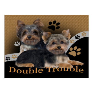 Yorkshire Terrier Double Trouble Prints Poster