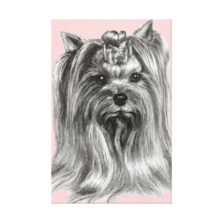 Yorkshire Terrier Drawing Canvas Print