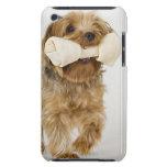 Yorkshire Terrier en caminar blanco del fondo iPod Touch Case-Mate Carcasas