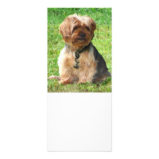 Yorkshire Terrier en parque Tarjetas Publicitarias Personalizadas