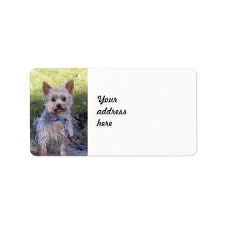 Yorkshire Terrier Etiqueta De Dirección