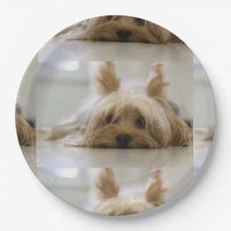Yorkshire-terrier flat.png paper plate