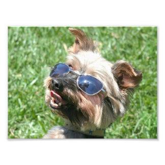 Yorkshire Terrier fresco Fotografía