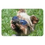 Yorkshire Terrier fresco Imán Rectangular