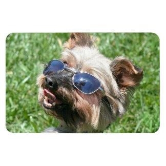 Yorkshire Terrier fresco Iman Rectangular