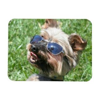 Yorkshire Terrier fresco Rectangle Magnet