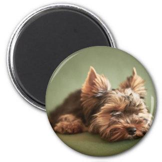 Yorkshire Terrier Fridge Magnets