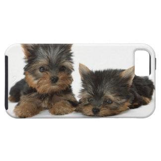 Yorkshire Terrier iPhone 5 Carcasas