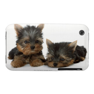 Yorkshire Terrier iPhone 3 Case-Mate Carcasa