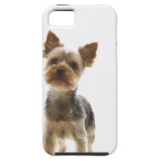 Yorkshire Terrier iPhone 5 Case-Mate Carcasa
