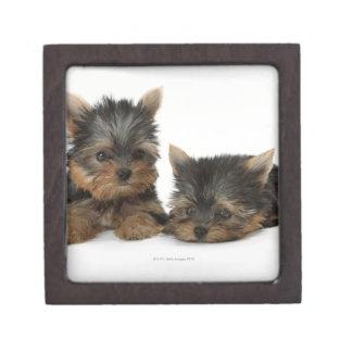 Yorkshire Terrier Gift Box