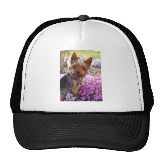 Yorkshire Terrier Mesh Hat