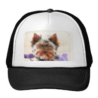 Yorkshire Terrier Cap