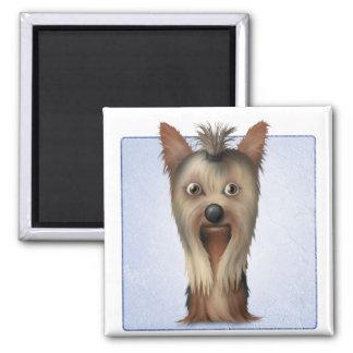 Yorkshire Terrier Iman De Nevera