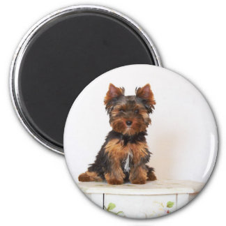 Yorkshire Terrier Imán Redondo 5 Cm