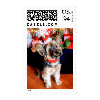 Yorkshire Terrier in bell collar with Christmas Postage