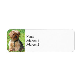 Yorkshire Terrier in Park Label