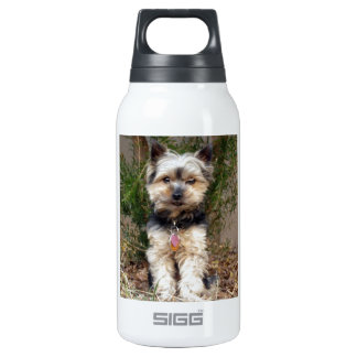 Yorkshire Terrier Insulated Water Bottle