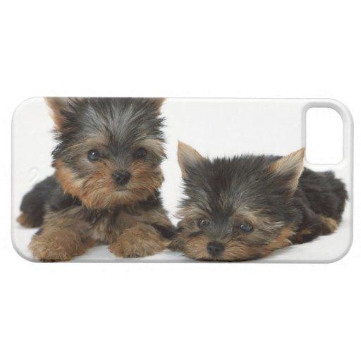 Yorkshire Terrier iPhone 5 Cobertura
