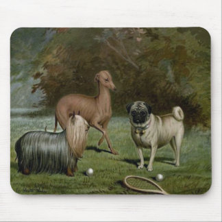 Yorkshire Terrier, Italian Greyhound, Pug Mousepad