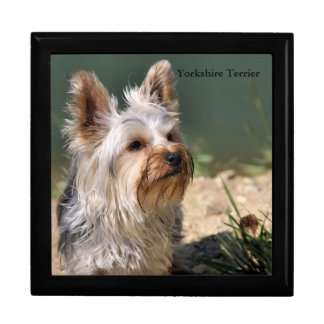 Yorkshire Terrier Jewelry Box