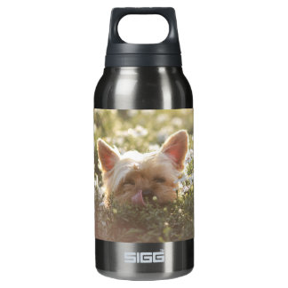 Yorkshire Terrier Laying in Sun licking lips Insulated Water Bottle