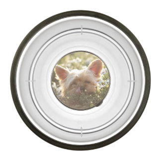 Yorkshire Terrier Laying in Sun licking lips Pet Bowl