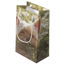 Yorkshire Terrier Laying in Sun licking lips Small Gift Bag