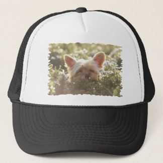 Yorkshire Terrier Laying in Sun licking lips Trucker Hat