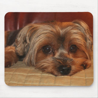 Yorkshire Terrier lindo Mousepad
